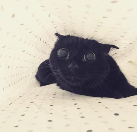 【猫画像】発見!