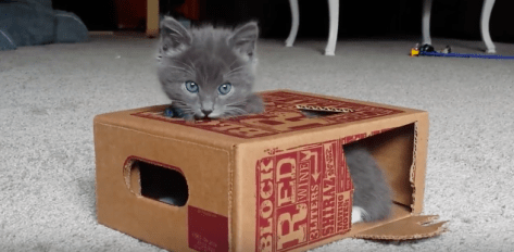 kitten_plays_winebox01
