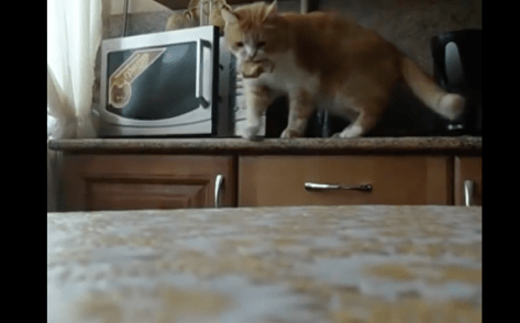 cat_opens_microwave07