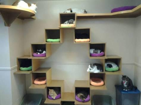 【猫画像】クリエイティブすぎる猫ベッド