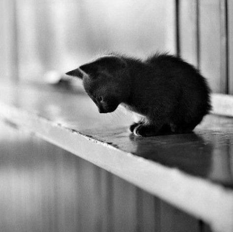 【猫画像】あっ・・・