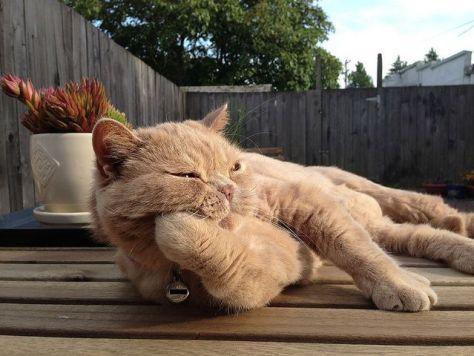 【猫画像】退屈・・・
