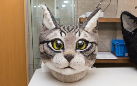 real_cat_head00