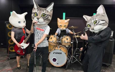 real_cat_head03