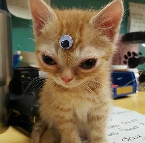 【猫画像】第三の眼