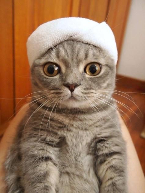 【猫画像】ターバン!?