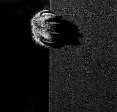 mono_cat_photo02