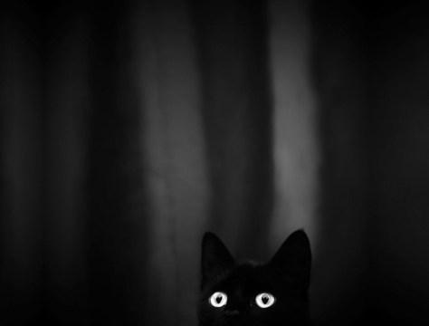 mono_cat_photo13