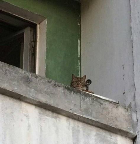 【猫画像】スナイパー!?