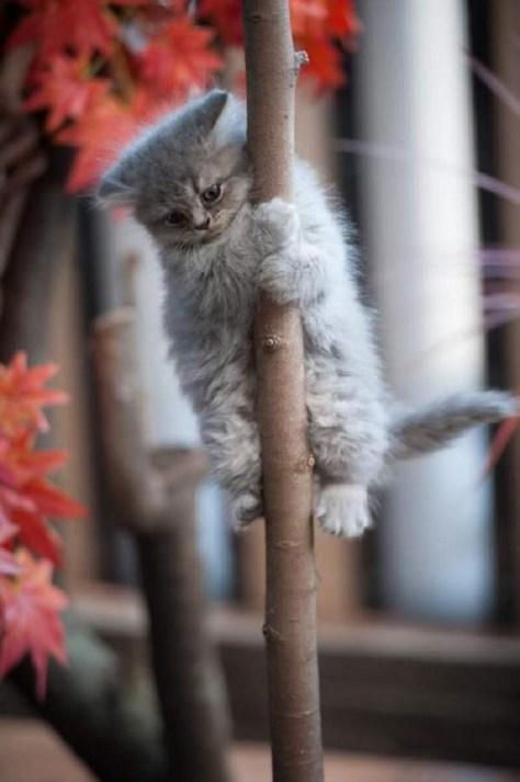 【猫画像】木のぼりの秋!?