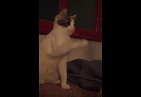 h5_cat01
