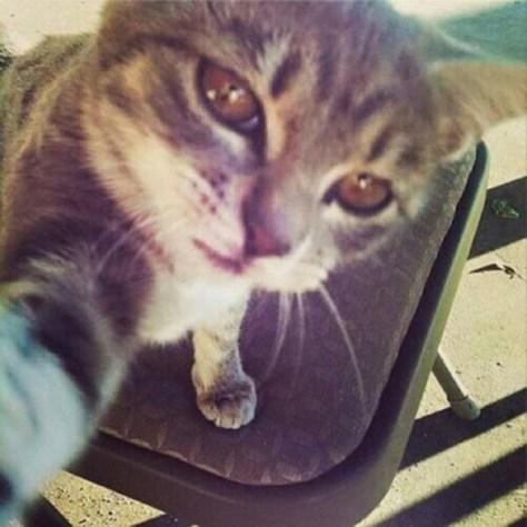 【猫画像】自撮り!?