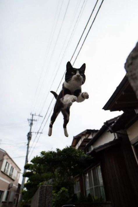 【猫画像】ジャンプ!