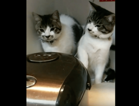 cats_and_rice_cooker03
