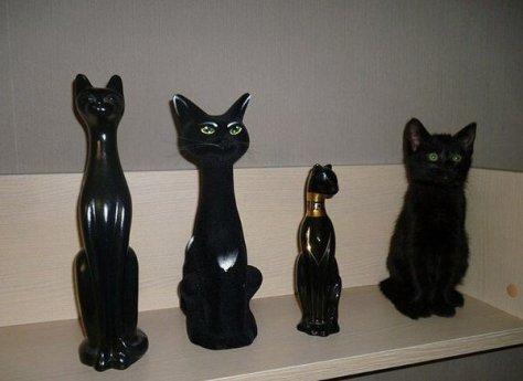 【猫画像】1つは本物!?