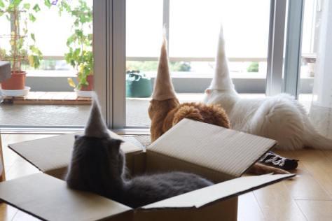cat_hat
