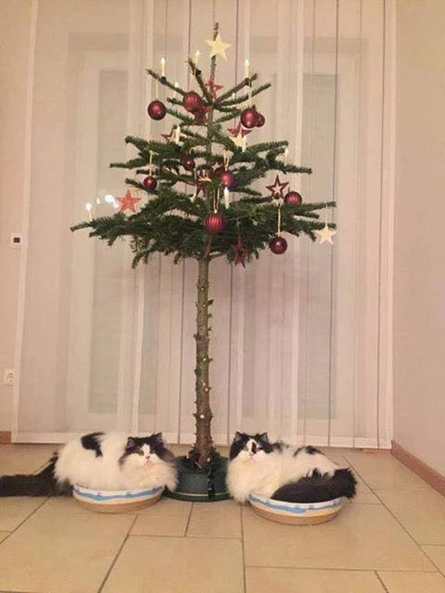 【猫画像】猫への対策!?