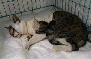 負傷猫(528手術)