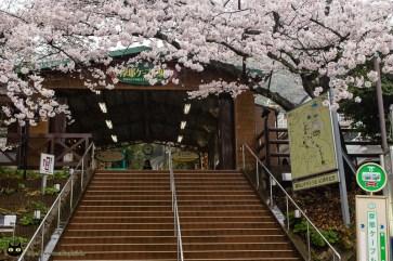 Maya Station Sakura
