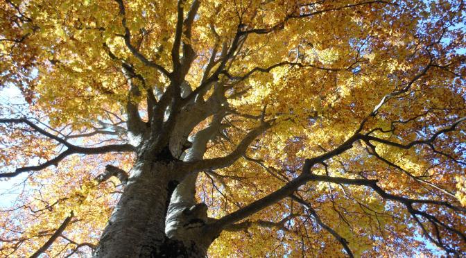 L'inizio del foliage: Pianezze di Valdobbiadene