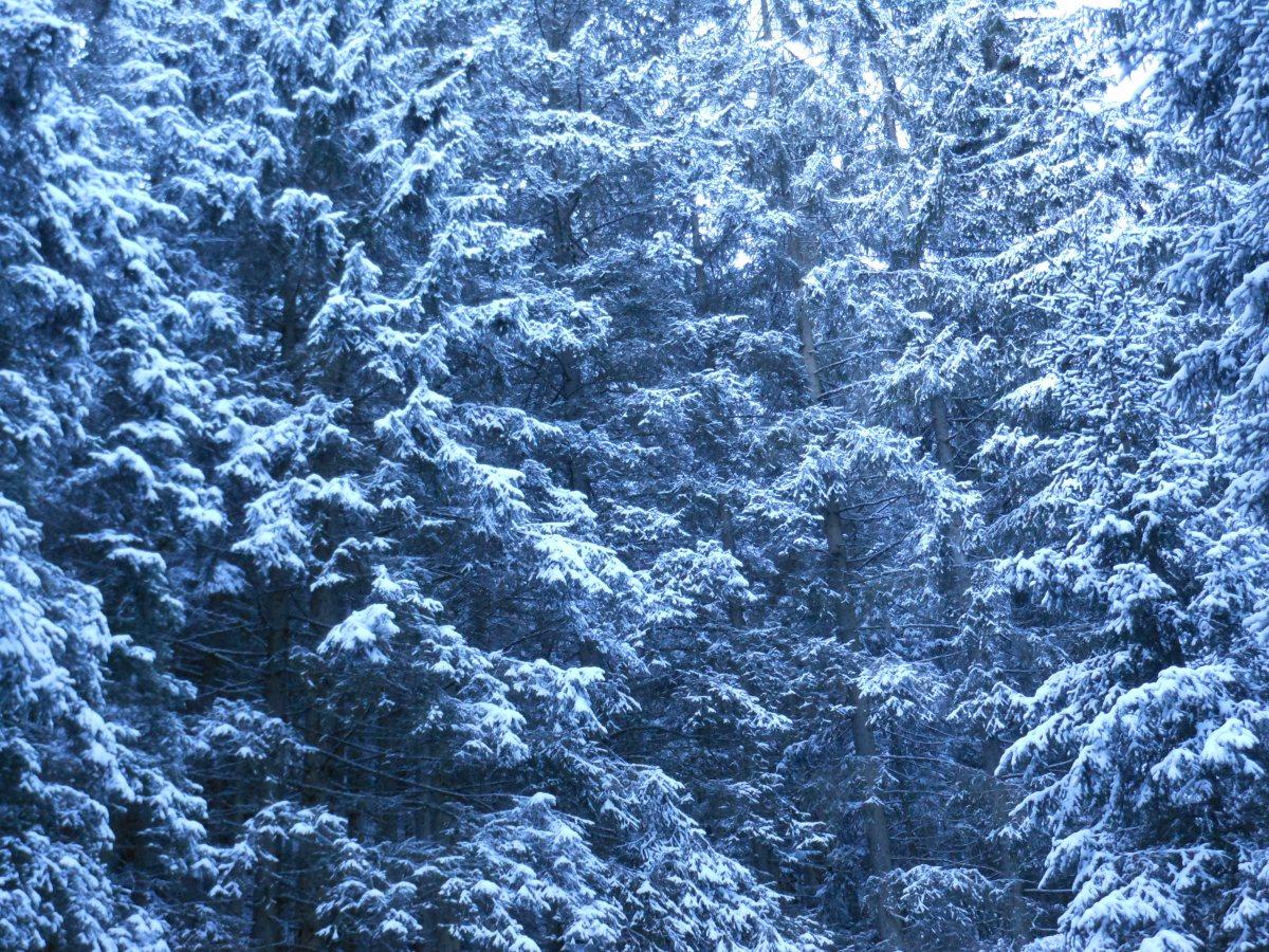 Alla ricerca della neve: Rio Scaleres Schalders (Bressanone)