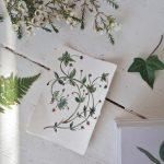 disegno-botanico-urban jungle