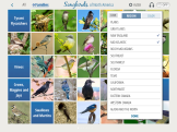 A basic search feature that limits birds to a specific region or plumage color