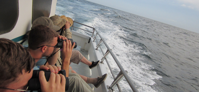 Part of the PSO group looking at a Great Shearwater and some Black-capped Petrels off the side of the boat. (Photo by Andy McGann)