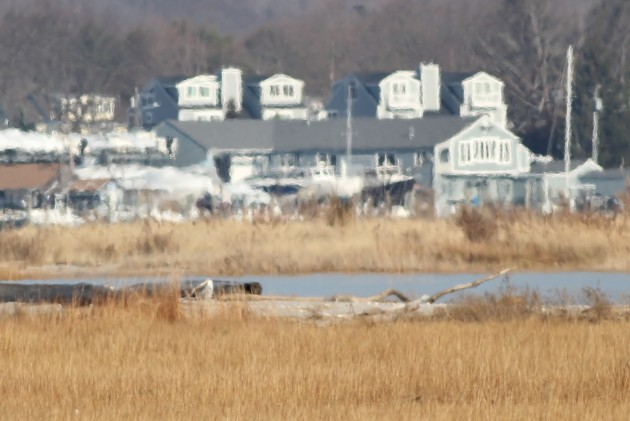 Distant Snowy Owl - Hammonasset Beach SP (Photo by Alex Lamoreaux)