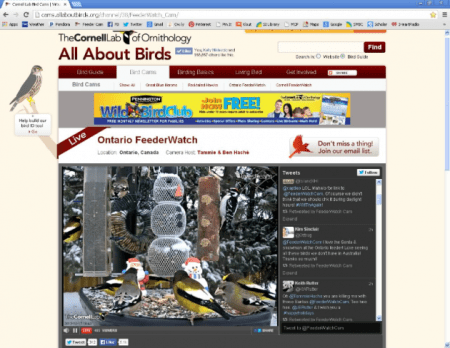 Screen shot of the Cornell Ontario Feedercam