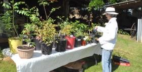 plant sale 12