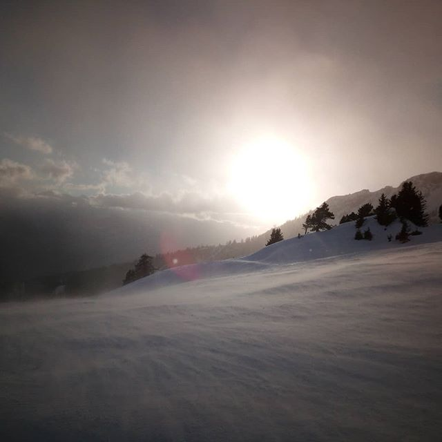 #montana #frisek