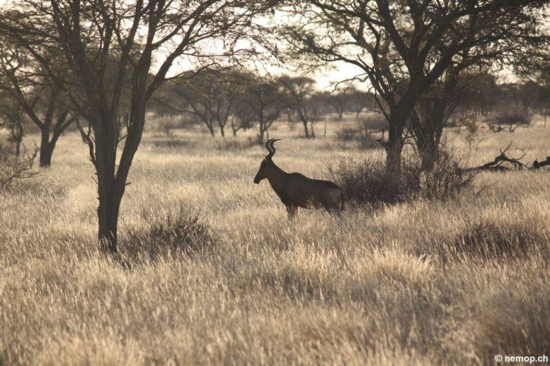 namibia-20