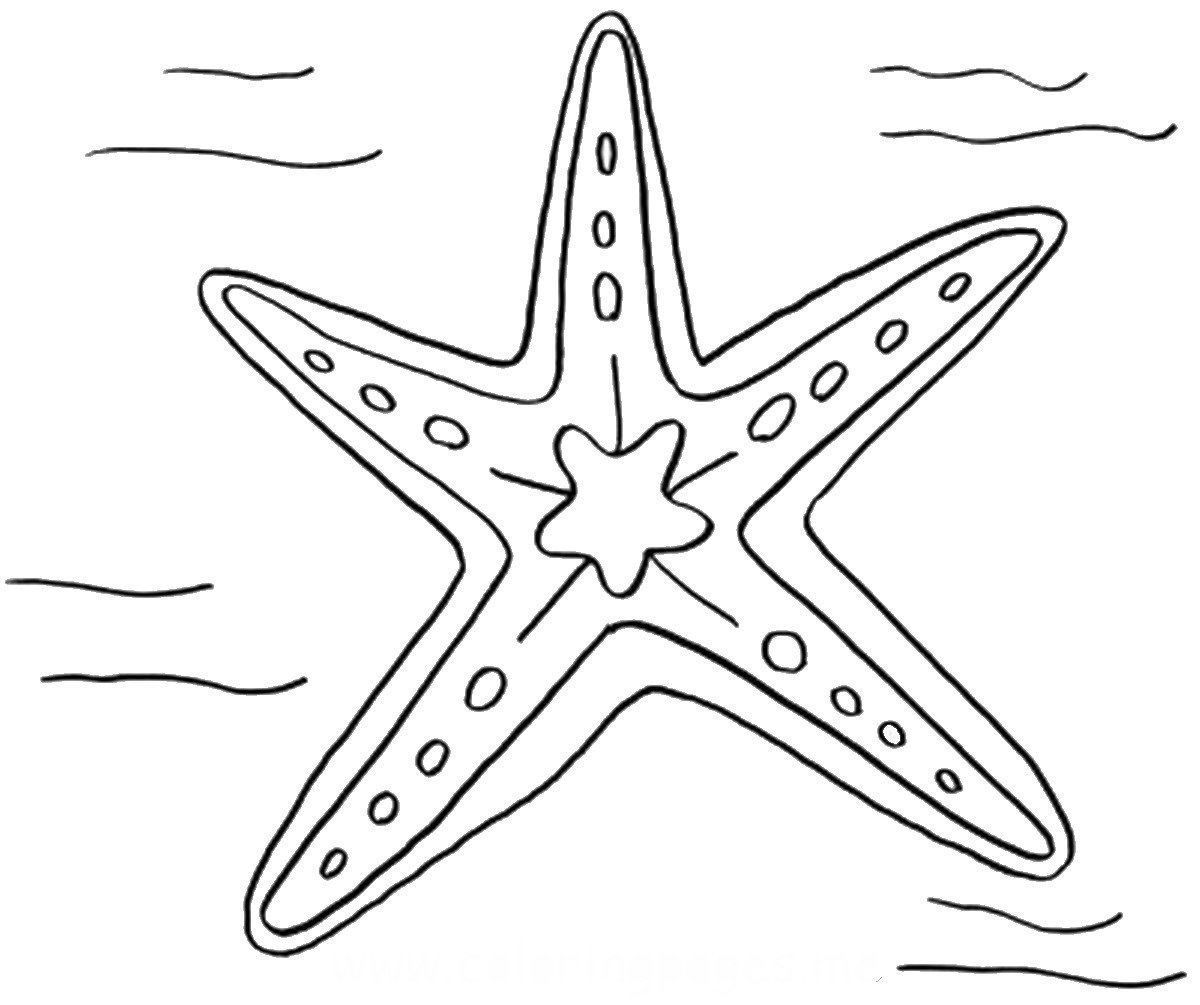 Starfish Coloring Pages Pictures - Whitesbelfast | 1005x1200