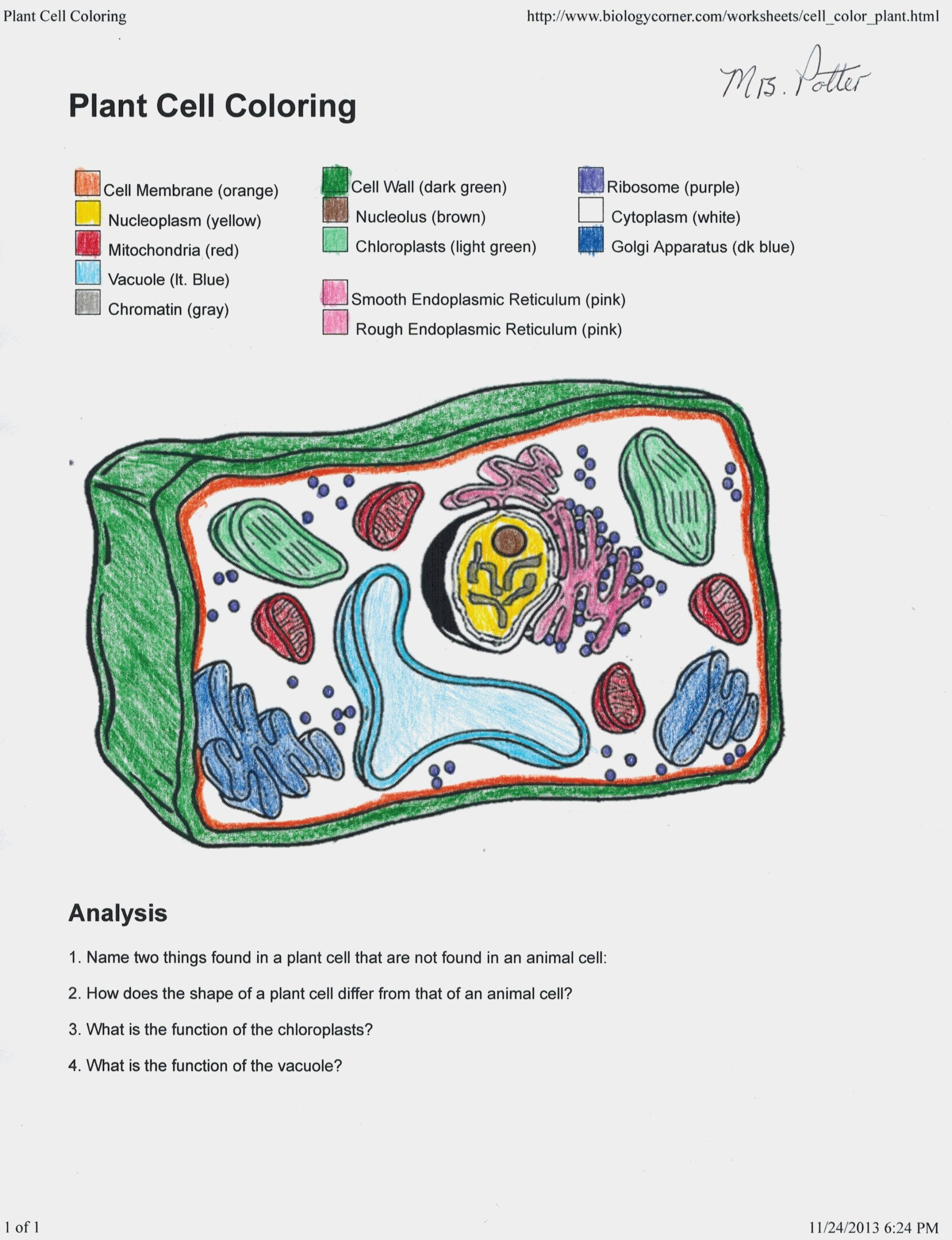 Plant Cell Coloring Key