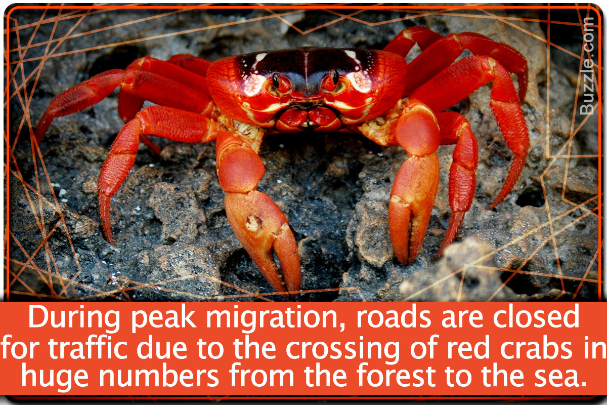 Crab Facts For Kids