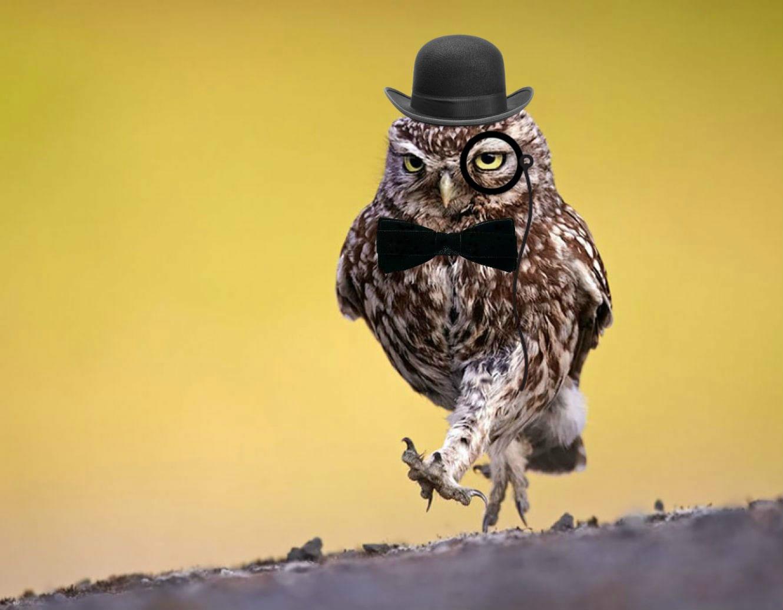 Gentleman Owl Blank Template Neo Coloring