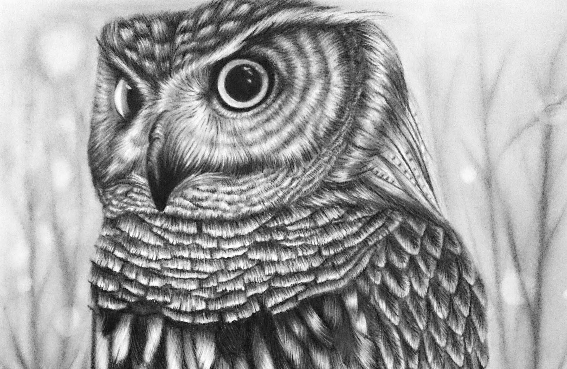 Download How To Draw Realistic Owls Neo Coloring