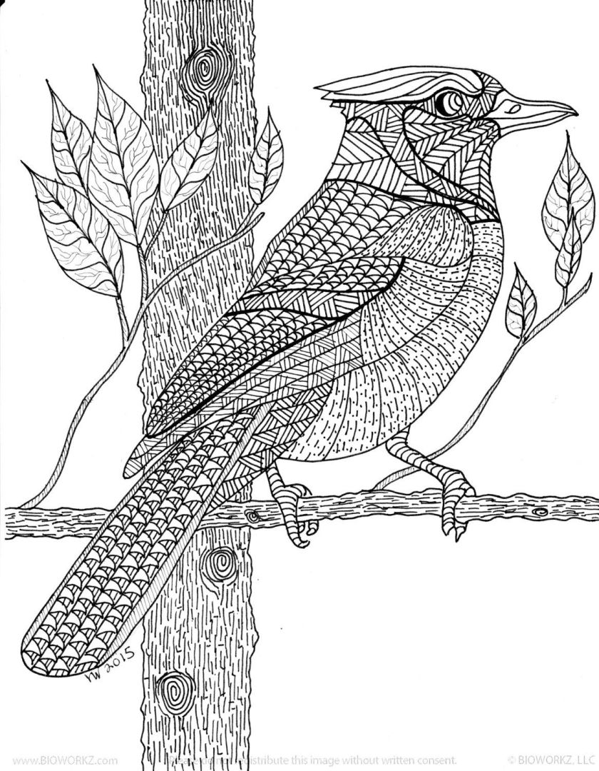 blue jay zentangle coloring pageinspirationbyvicki on