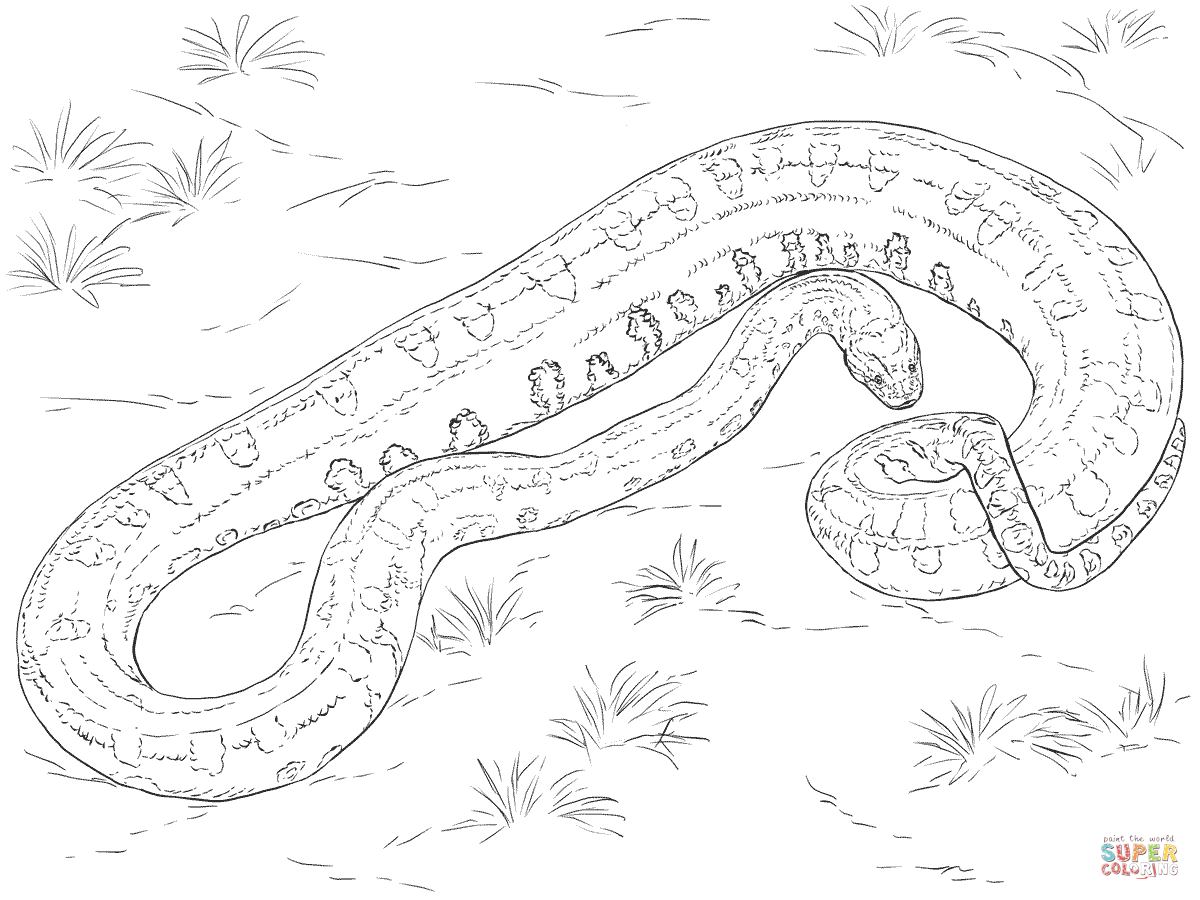 Anaconda Colouring Pages