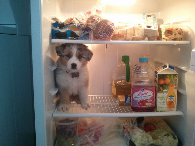 fridge-630x472