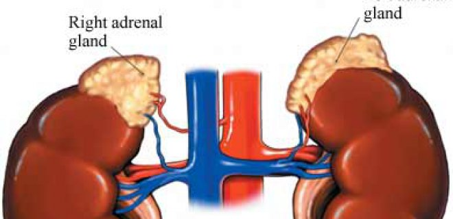 addison 001 - Methods for the diagnosis and treatment of adrenal insufficiency