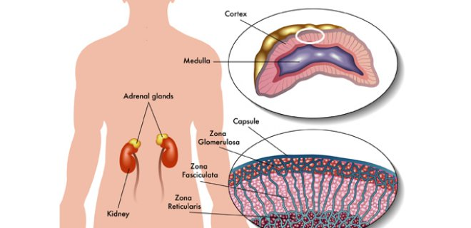 adrenal hipofonksiyon 001 - Hipofonksiyon Adrenal diagnosis and treatment methods