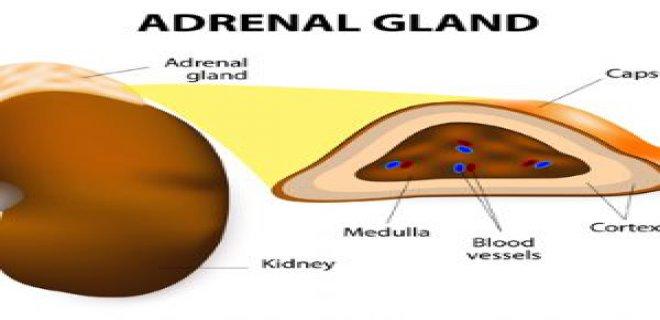 Diagnosis Adrenal Hipofonksiyon