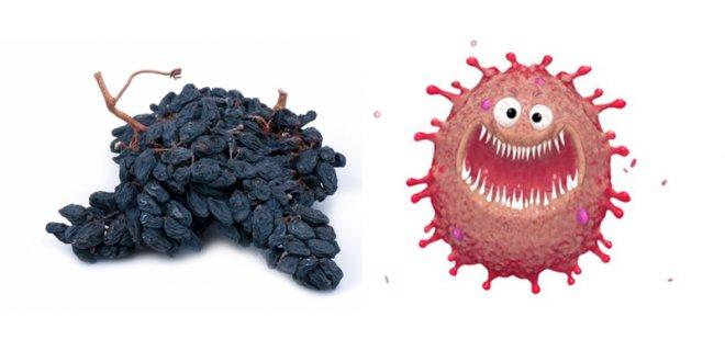 kanser 008 - Benefits Of Raisins