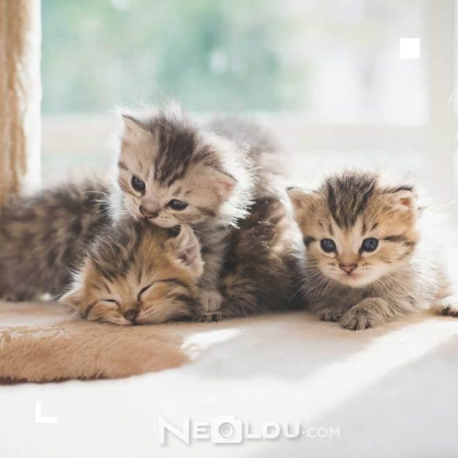 En İyi Sindirim Hassasiyetli Kedi Maması