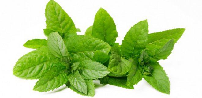 nane tuketimi - Plants Good For Bronchitis
