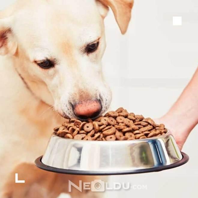 Tahıllı Köpek Maması