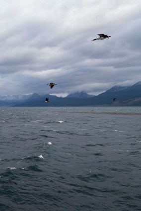Birds In The Beagle Channel