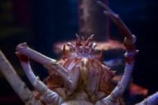 Crab Close
